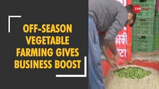 Himachal Pradesh: Off-season vegetable farming gives business boost