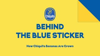 Chiquita: An Association With Corporate Terrorism Gone Bananas