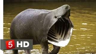 10 MOST DANGEROUS ANIMALS OF AMAZON RAINFORESTS!