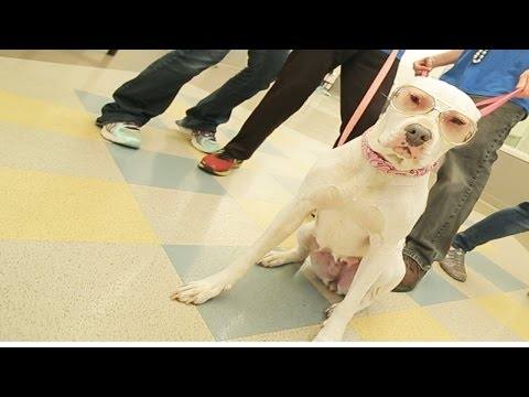 OAKTOWN PUP! Uptown Funk PARODY with DOGS