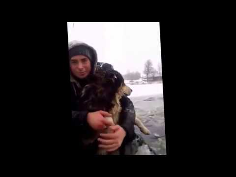 Спасение собаки дорожниками карельского ТехноСтроя в Усть Долыссах