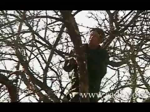 Омолаживающая обрезка  дерева – когда, как и что