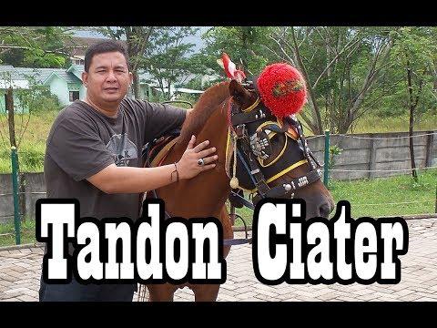Berkuda di Tandon Ciater