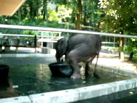 媛チャンバケツ遊び20070817 19とべ動物園