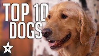 TOP 10 Dog Auditions On Got Talent Ever! | Got Talent Global
