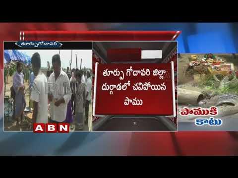 28 రోజులపాటు స్థానికుల పూజలు అందుకున్న పాము మృతి | ABN Telugu