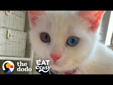 Play this video The Stages Of Getting A Second Cat   The Dodo Cat Crazy