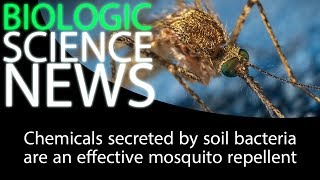 Science News - Chemicals secreted by soil bacteria are an effective mosquito repellent