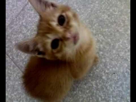 il mio gatto.mp4