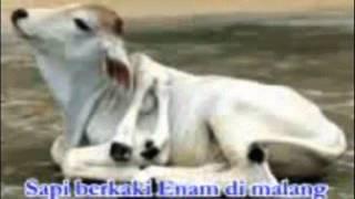 download lagu Shalawat Badar - Uje Ft. Wafiq Azizah gratis