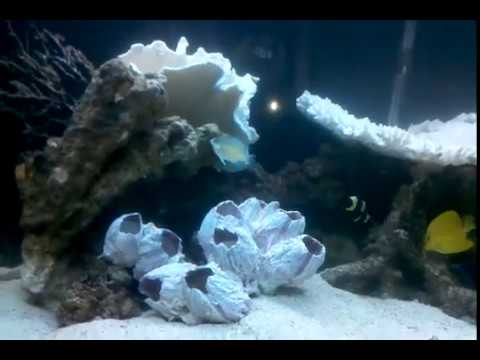 72 gal saltwater aquarium (private residence)