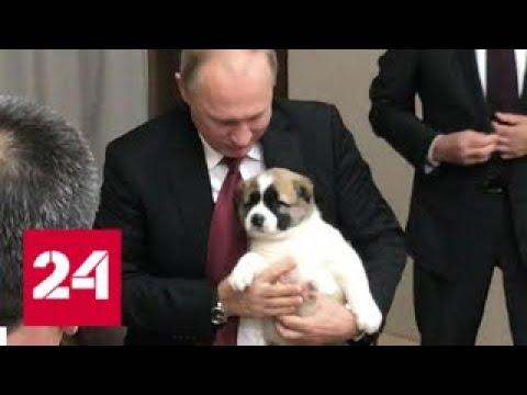 Два саммита в Сочи: в резиденции Путина появился новый обитатель - Россия 24
