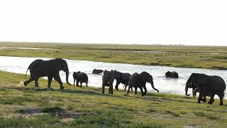 The Land of the Giants- close encounter with african elephant: chobe national park