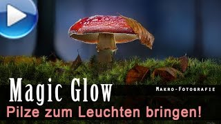 Magic Glow - Pilze leuchtend fotografieren!