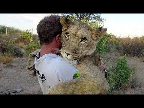 5 Tiere die Menschen das Leben Gerettet haben