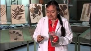 El herbario de plantas medicinales del IMSS