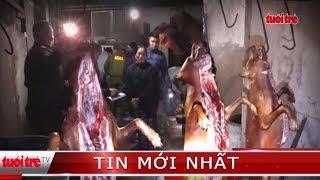 ⚡ Tin mới nhất | Phá đường dây trộm chó chuyên nghiệp tại Hà Tĩnh