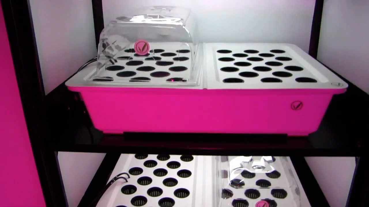 Hydroponic Clone Machine Incredible Cloning Growing