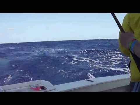 dorado fishing, maui maui, dolphin, nassau bahamas