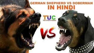 German Shepherd Vs Doberman In Hindi   Dog Comparison   The Ultimate Channel
