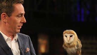 Owl name reveal | The Late Late Show | RTÉ One