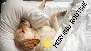 My Dog's Morning Routine - Zazu the Labrador
