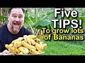 5 Tips How To Grow A Ton Of Bananas In The Backyard mp3