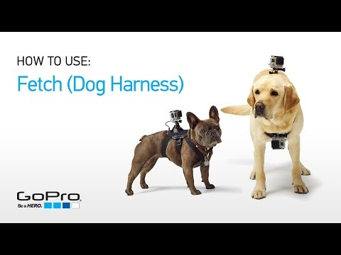 GoPro: Introducing Fetch (Dog Harness)