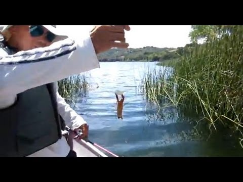 how to catch crawdads in a lake