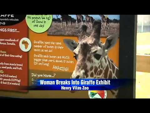 Californian Woman Breaks Into Giraffe Exhibit At The Zoo And Gets Brutally Kicked In The Face!! video