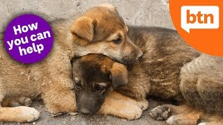 How to Help Stray Animals: World Stray Animals Day - Today's Biggest News
