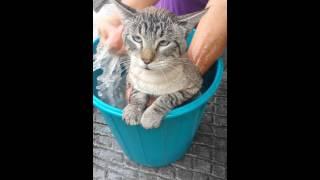 Download Lagu Gato dice Raul Gratis STAFABAND