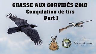 Compilation de tirs aux corvidés 2018 - Part 1 - Alexis Chasse