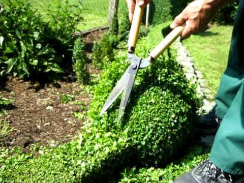 buchsbaum heckenschnitt teil 4 boxwood hedge cutting part. Black Bedroom Furniture Sets. Home Design Ideas