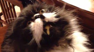 Cat gets brain freeze - funny cats getting brainfreeze compilation