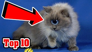 Top 10 Most UNUSUAL CAT Breeds