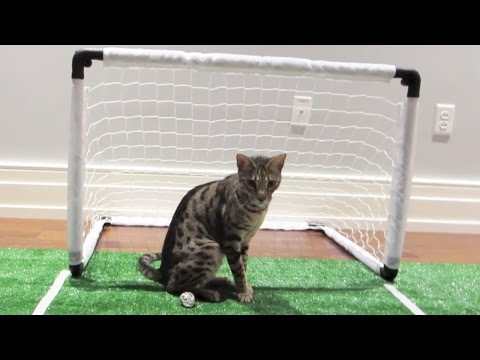 EPIC SOCCER KITTY!
