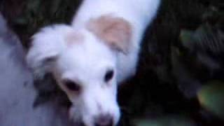"PARERAS ""BOLEK"" funny animals video PET DOG"