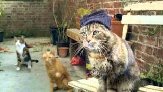 FIDLAR - Awkward (CATS!)