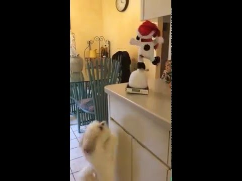 犬とおもちゃの犬のシンクロダンス