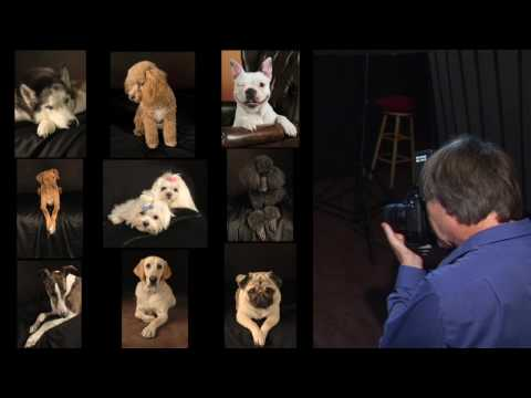 Amazing  Distinctive Dog Photography in San Jose by Joseph Sargent 1st .Episode HQ H264 HD