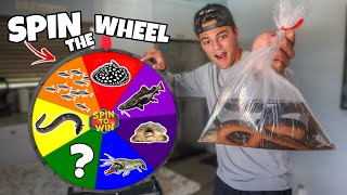Spin the Wheel & BUYING Whatever it Lands On - Challenge