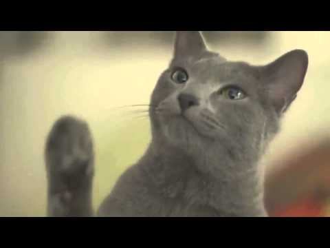 Cute cat commercial collection of Japan !