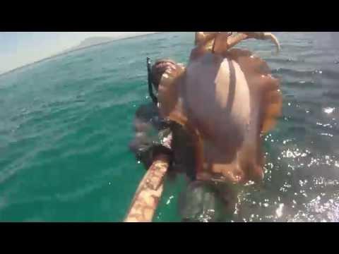 Pesca Submarina Sepia 5 Kgs.