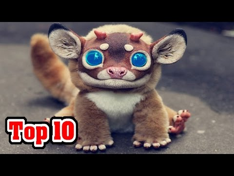 Top 10 MOST AMAZING Animal Hybrids