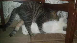 Прикол с котом его первый раз