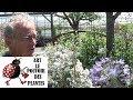 Tuto Jardin Agapanthe Blue Triumphator Comment Faire La Taille Et L Entretien Plante Vivace mp3