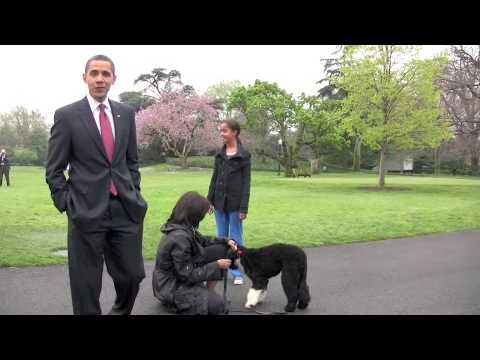 President Obama's new dog - Bo Obama arrives at White House