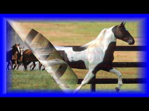 corridos de caballos vicente fernandez y antonio aguilar
