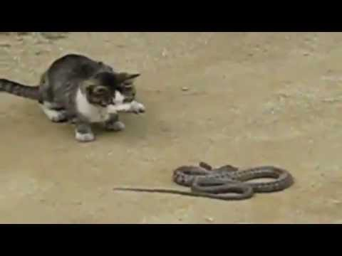 Cat vs Snake - animal full episodes high jumping cat attacks talking cat planet